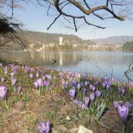 Pomlad_na_Bledu__foto_Meta_Kenda-d1ab37087b1b63a4f7a8283b88e70725.JPG