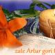 artur-4769261388ce45b3887403e626798aef.png