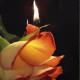 zate_Jasmina-52986dafa0a472f9d57724d65576478e.png